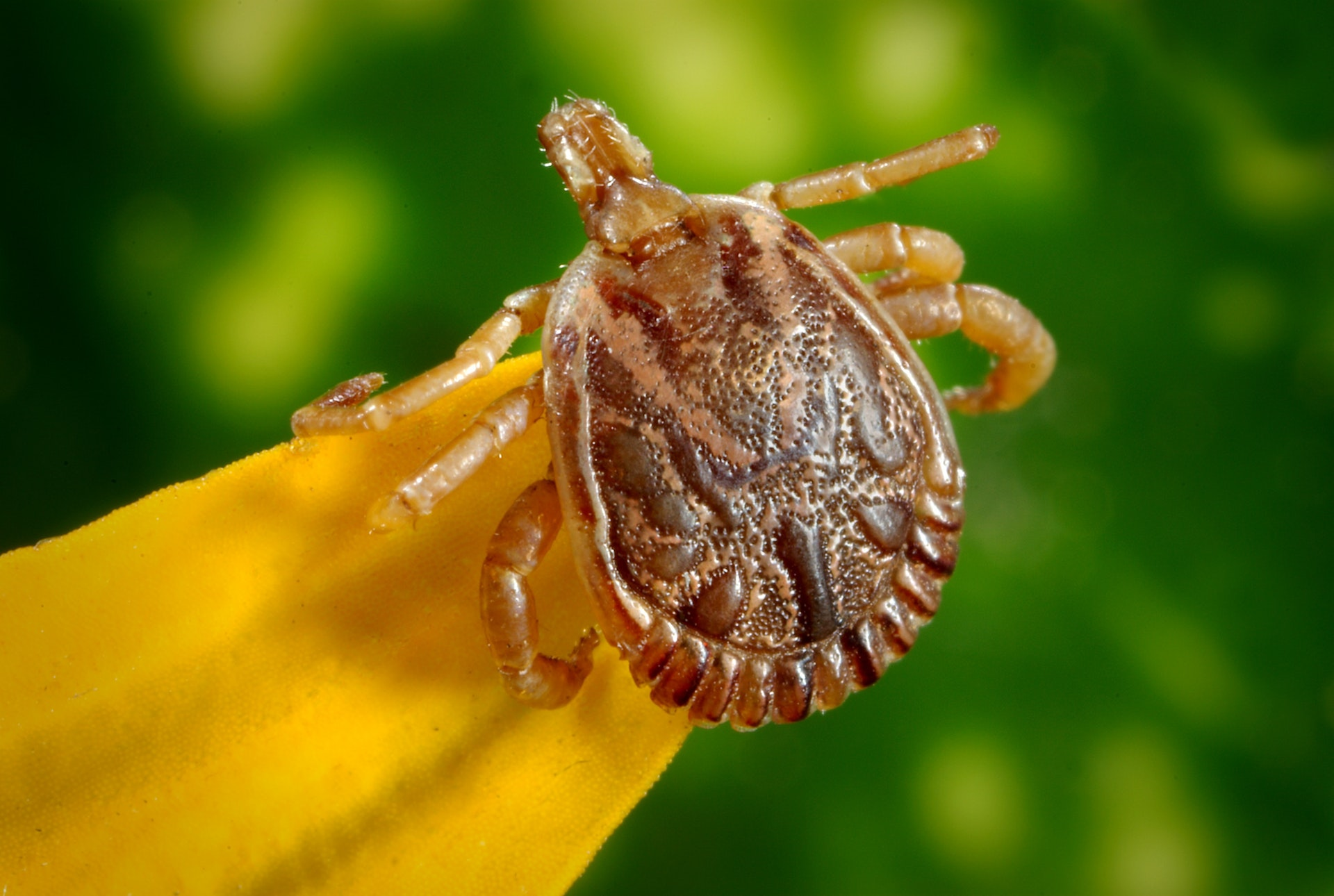 Lyme Disease: Same Symptoms, Different Story
